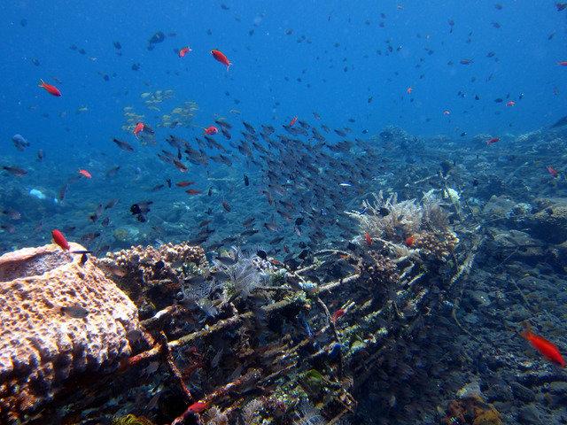 Diving in Karangasem, Indonesia - By Nicolas